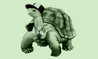 fig. b - Galapagos Tortoise (a.k.a. G. Tizzy)